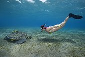 Woman with mask and fins snorkling with Green Sea Turtle (Chelonia mydas), Red Sea, Abu Dabab, Marsa Alam, Egypt, Africa