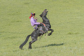 Mongol man traditionnaly dressed on a horse, traditional exercise of address, demonstration of pitching, Bashang Grassland, Zhangjiakou, Hebei Province, Inner Mongolia, China