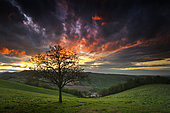 The tree of dreams, Fog in the sunset, Langhirano, Parma, Italy,