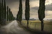 Cypres tree-lined avenue, road to the farmhouse, Asciano, Siena, Tuscany, Italy