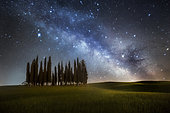 Cypress trees in Val d'Orcia, San Quirico d'Orcia, Siena, Tuscany, Italy
