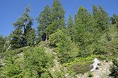 Mercantour National Park, France