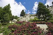 Mercantour National Park, The Cougourd, Alps, France