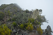 Maido peak, Reunion Island