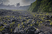 Lava Flow, Le grand brulé, Reunion Island