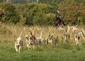 Fox hunting in Buckinghamshire, England