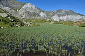 Peat bog of glacial origin in the circus of Troumouse, Pyrenees, France