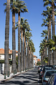 Palm trees, Street lined with palm trees in spring, City of Hyères, Var, France