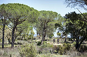 Landscape of the plains of the Maures in spring, with path and mountain bikers, Surroundings of Mayons, Var, France