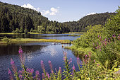 Vosges landscape in summer, Lake view of the Lispach peatland, surroundings of La Bresse, France