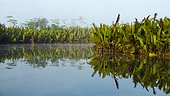 Morning atmosphere and water reflection in the river Sungai Sekonyer in Tanjung Puting National Park, Central Kalimantan, Borneo, Indonesia, Asia