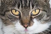 Domestic Cat's eyes, France