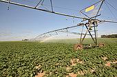 Irrigation ramp in a potato field, Beauce, Center-Val de Loire, France