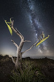 Attracted by the stars. Praying mantis at night with Milky Way in the background - Single exposure changing focus during the shot, Luzzara, Reggio Emilia, Italie