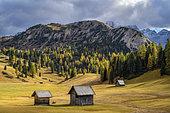 Prato Piazza pastures, Dolomites, Parco naturale Fanes Senns Braies, Dolomites, Tyrol, Italy
