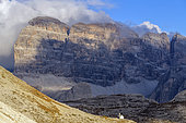 Chapel of Lavaredo, Massif of the Dolomites, seen from the foot of the Tre Cime of Lavaredo, Parco naturale des Tre Cime, Massif of the Dolomites, Tyrol, Italy