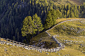 Val di Fanes in the Dolomites, Barrier protection for cattle, Val di Fanes, Natural Park Fanes-Sennes-Braies, Dolomites, Tyrol, Italy