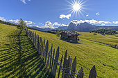 Alpe di Siusi, the famous Dolomite mountain pasture, the largest Dolomite pasture, Dolomites, Tyrol, Italy