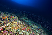 Colors at 80 m depth, Mayotte. A color panel that can be discovered at 80 m depth.