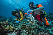 Tara Pacific expedition - november 2017 Nubara Island, Solomon Sea, Grace Klinges (r) and Guillaume Iwankow (CRIOBE)(l) sampling coral, D: 20 m