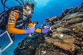 Tara Pacific expedition - november 2017 Nubara Island, Solomon Sea, Grace Klinges sampling coral, D: 20 m