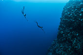 Tara Pacific expedition - november 2017 Fore reef, Banban and Muli Islets, papua New Guinea, Freediving, Nicolas Bin (first mate on Tara) (l) and Guillaume Bourdin (oceanographer) (r) are scouting the reef before sampling fish with spearguns. D: 10 m