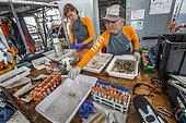 Tara Pacific expedition - november 2017 Proceeding of coral samples o/b Tara, Papua New Guinea, Rebecca Vega Thurber (scientific coordinator, right) and Grace Klinges (student, left)