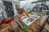 Tara Pacific expedition - november 2017 Proceeding of coral samples o/b Tara, Papua New Guinea, Dr. Rebecca Vega Thurber (scientific coordinator), Associate Professor, Oregon State University