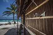 Expédition Tara Pacific - novembre 2017 Île de Yanaba, Atoll d'Egum, Papouasie Nouvelle Guinée, la pêche aux requins est un problème même dans cette île isolée. Les ailerons de requin séchés sont vendus à de rares clients asiatiques.