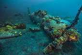 Tara Pacific expedition - november 2017 Kimbe Bay, papua New Guinea, Zero wreck: Coral growth on this wreck is from a period of 74 years ! D: 15 m The ZERO, is a Japanese WW2 fighter plane wreck. This Zero wreck was discovered in January 2000 by local William Nuli while he was freediving for sea cucumbers. He asked the Walindi Plantation Resort dive team if they might know what it was, and when they investigated they uncovered the intact wreck of a Zero fighter, resting on a sedimented bottom in 15 m depth. This World War II Japanese fighter is almost completely intact. The plane is believed to have been ditched, the pilot is believed to have survived, but was never found on the island. He never returned home. Maybe he disappeared in the jungle… On 26th December 1943, during the battle of Cape Gloucester, the Japanese pilot made an emergency landing, ditching his Mitsubishi A6M Zero plane into the sea approximately 100m off West New Britain Province. The plane was piloted by PO1 Tomiharu Honda of the 204st Kōkūtai. His fate is unknown but it is believed the he made a controlled water landing after running out of fuel and survived. Although he failed to return to his unit, the plane was found with the throttle and trim controls both set for landing and the canopy was open. There are no visible bullet holes or other shrapnel damage and the plane is still virtually intact after over 70 years underwater. It is a A6M2 Model 21 Zero, made famous for its use in Kamikaze attacks by the Japanese Imperial Navy. The wreck has the Manufacture Number 8224 and was built by Nakajima in late August 1942.