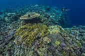 Expédition Tara Pacific - novembre 2017 Zone récifale antérieure, D: 3 m, récif au large de l'île Suba Suba, 1,9 km à l'ouest du Site du Bubble Reef, Île Normanby, Papouasie-Nouvelle-Guinée