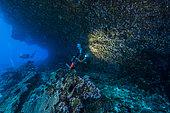 """Tara Pacific expedition - november 2017 Coral limestone overhang, D: 11 m, Fringe reef of unnamed """"Islet"""", 8 km north of Yanaba Island Islet, Papua New Guinea"""
