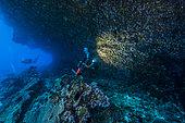 """Expédition Tara Pacific - novembre 2017 Surplomb de corail calcaire, P: 11 m, Récif-fangeant d'un """"îlot"""" sans nom, à 8 km au nord de l'île de Yanaba, Papouasie Nouvelle-Guinée"""