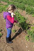 Girl using a fork spade in a kitchen garden, summer, Pas de Calais, France