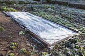 Lamb's lettuce protected by a veil in winter, Moselle, France