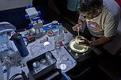 Tara Oceans Expeditions - May 2011. Christian Sardet, CNRS biologist, selecting plancton for microscopy o/b Tara.