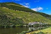 Winery Quinta das Carvalhas on the Douro River, Alto Douro Region, Pinhao, Douro Valley, Portugal, Europe