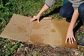 Lasagna bed ; plant fruits in lasagna bed. In soils that are poor, rocky, clayey or simply grassy, lasagna is a magical solution for planting fruit trees.