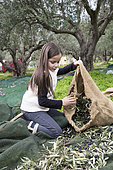 Alessandra, 7, bagged olives in Kritsa, Crete, Greece