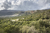 Olive grove and village of Kritsa, Crete, Greece