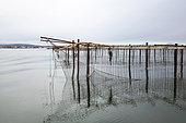 Oysters park on Etang de Thau, Hérault, France