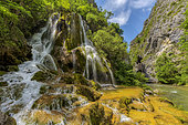 The Green Cascade, near Saint Eulalie en Royans, in the Vercors, France. Petrifying source with formation of travertines (Cratoneuron moss, Brachythecium, and Lyngbya encrusting bacteria), remarkable petrifying waterfall, on the course of the Vernaison river, under the Great Gulets, Vercors Massif