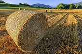 Straw rolls in a harvested field, Haute Savoie, Alps, France