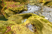 Rivière de montagne en automne. Le Chéran a sculpté son lit dans une couche de grès molassique tendre, formant ainsi des gorges remarquables vers Hery sur Alby, PNR des Bauges, Savoie, France
