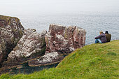 Seabird Watching, St Abb's Head Reserve, Scotland