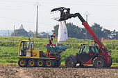 Fertilizer spreading in the Vendée marsh with a tracked machine, Vendée, France