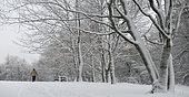 Walker in the snowy Vosges forest (pine-beech-fir forest), Regional Natural Park of Vosges du Nord, France