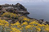 Cap Creus Nature Reserve, Catalonia, Spain