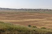 Grain plain in eastern Georgia.