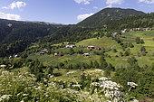 Middle Caucasus at the Turkish border, Georgia.